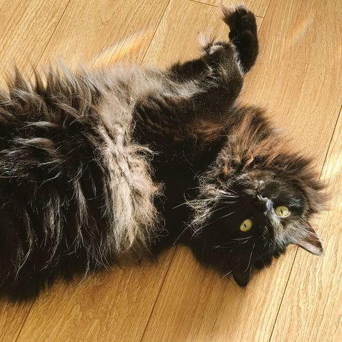 Relaxing day. Cat Black Cat Pet Feline Cats Cat♡ Cat Lovers Cats Of EyeEm