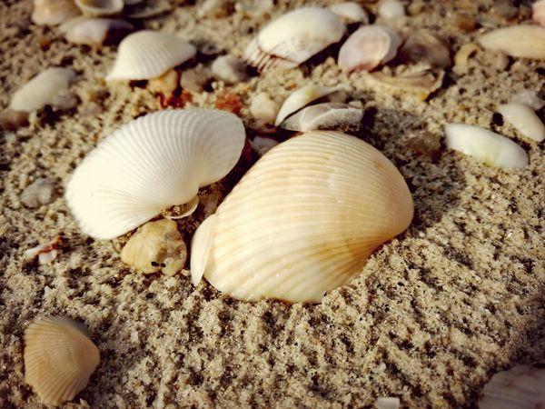 Seashells, Sand And Water Beach Nature Seashell