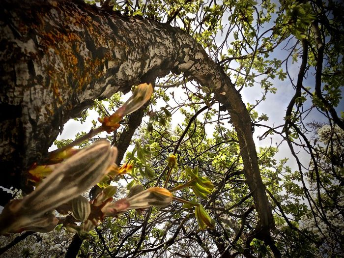 Day Tree Growth Freshness Tree Trunk Branch Close-up Low Angle View Beauty In Nature Nature Flower Head Blossom Growing Outdoors Sky Tranquility Utah Beauty In Nature Long Nature Scenics Tree Trunk Backgrounds