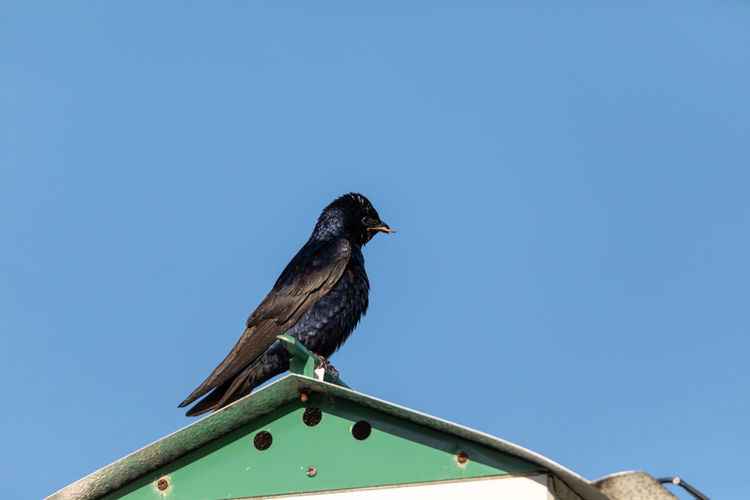 Low angle view of bird perching on a blue sky