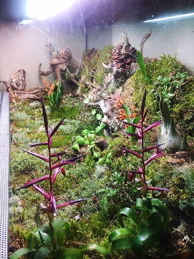 Tillandsia Orchids Terrarium🍀