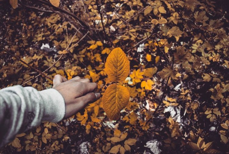 Close-Up Of Hand Holding Autumn Leaves