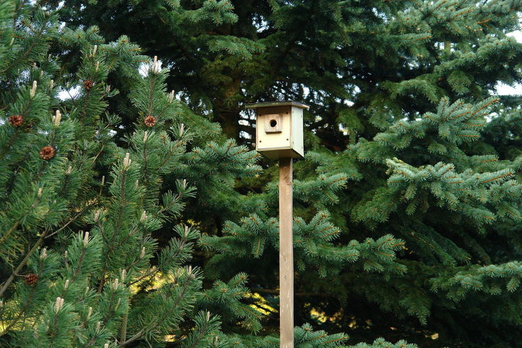 Animal Themes Beauty In Nature Birds Day Green Color Growth Incubator  Low Angle View Nature Nesting Box Nesting Place No People Outdoors Plant Tree