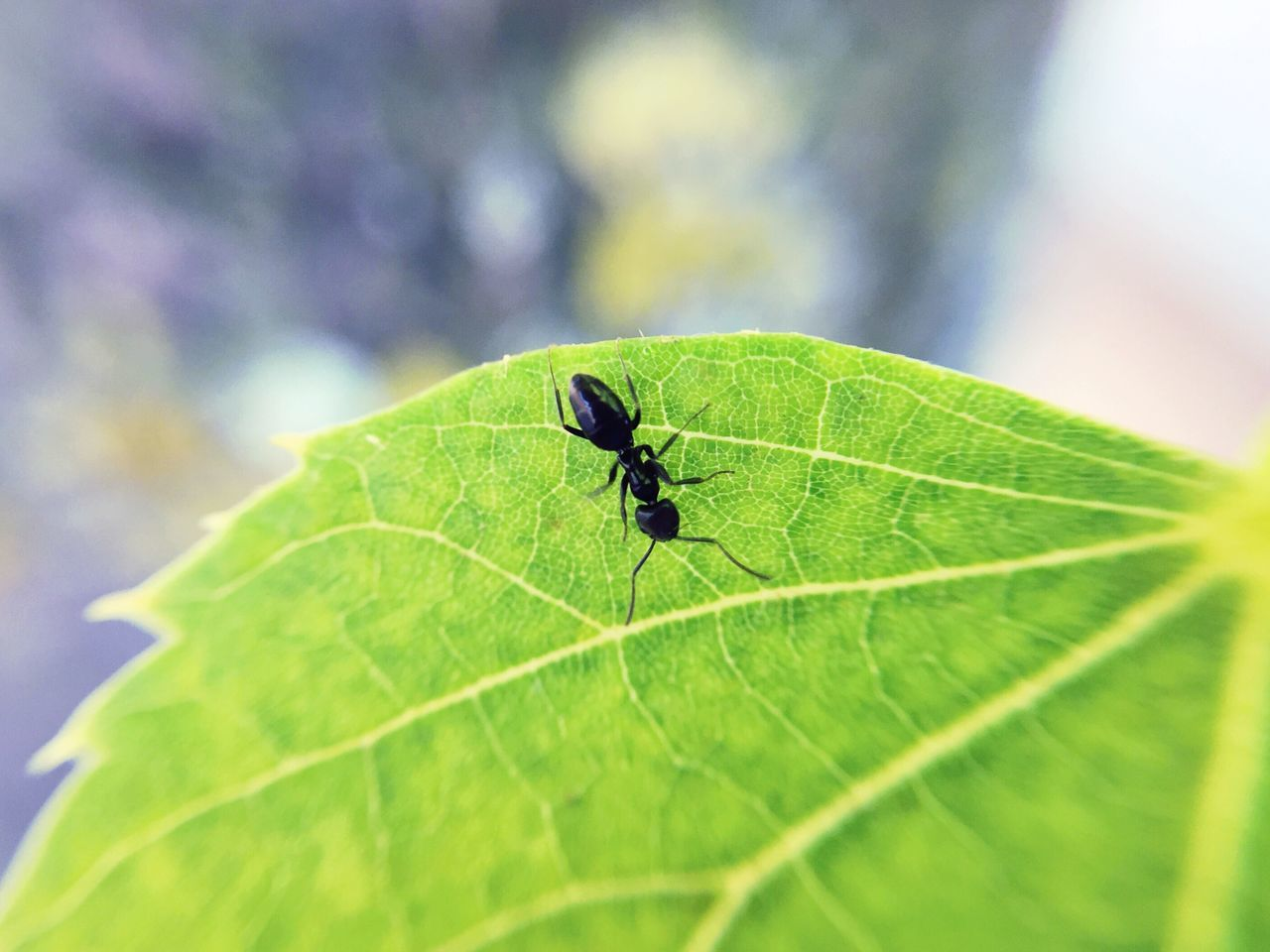 leaf, green color, nature, insect, one animal, animal themes, day, close-up, animals in the wild, no people, outdoors, beauty in nature, fragility, freshness
