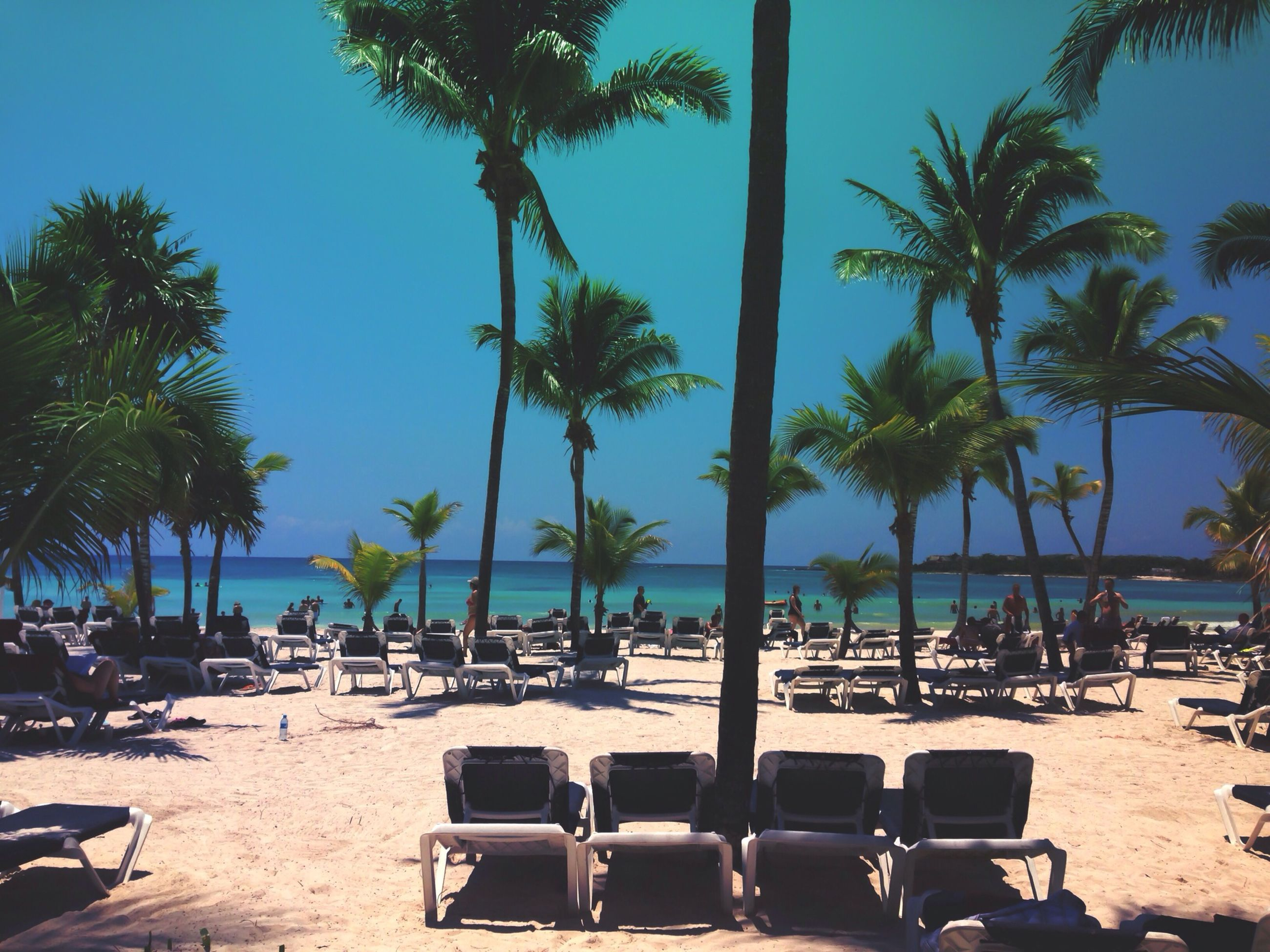 beach, sea, tree, water, sand, palm tree, shore, vacations, horizon over water, relaxation, beach umbrella, chair, clear sky, leisure activity, large group of people, lounge chair, sunlight, sky, tranquil scene