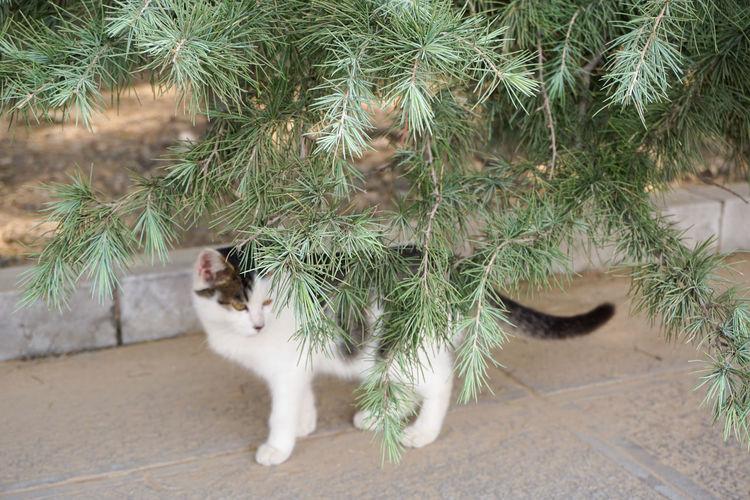 白马寺的一只猫 Cat