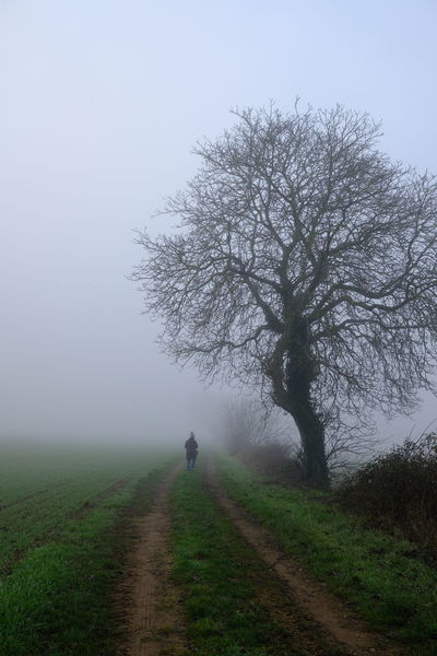 Fog Plant Tree Direction The Way Forward One Person Land Beauty In Nature Nature Field Sky Tranquility Footpath Road Full Length Tranquil Scene Environment Walking Grass Outdoors Diminishing Perspective