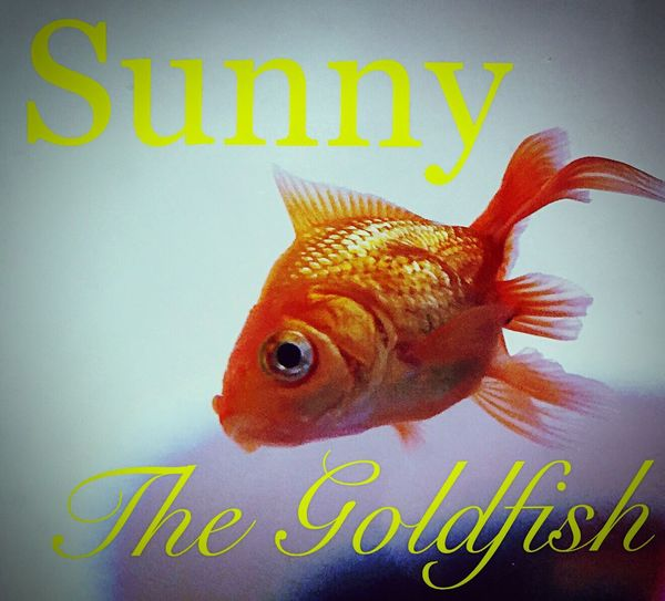 Text Western Script Fish Close-up Yellow Animal Themes Communication Sunny The Goldfish Vibrant Color Retail  Exotic Pets Multi Colored Pink Color Zoology No People wWateroOrange ColorPPickering OntarioaAquarium Life aAquarium Fish FFirst PetpPortraitSSunny ☀️ The GoldfishdDogfishPPet Photography