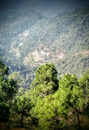 Nature High Angle View Day Water Beauty In Nature Tree Landscape Photography Motog5plus India Himachaltourism Landscape_photography Landscapes Landscape_Collection Landscape First Eyeem Photo VSCO Mountain Greenery Solan