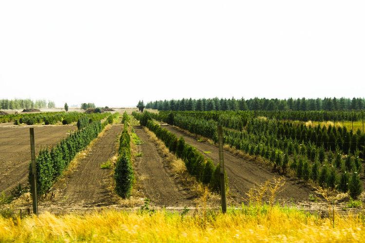 Rows of plants in field