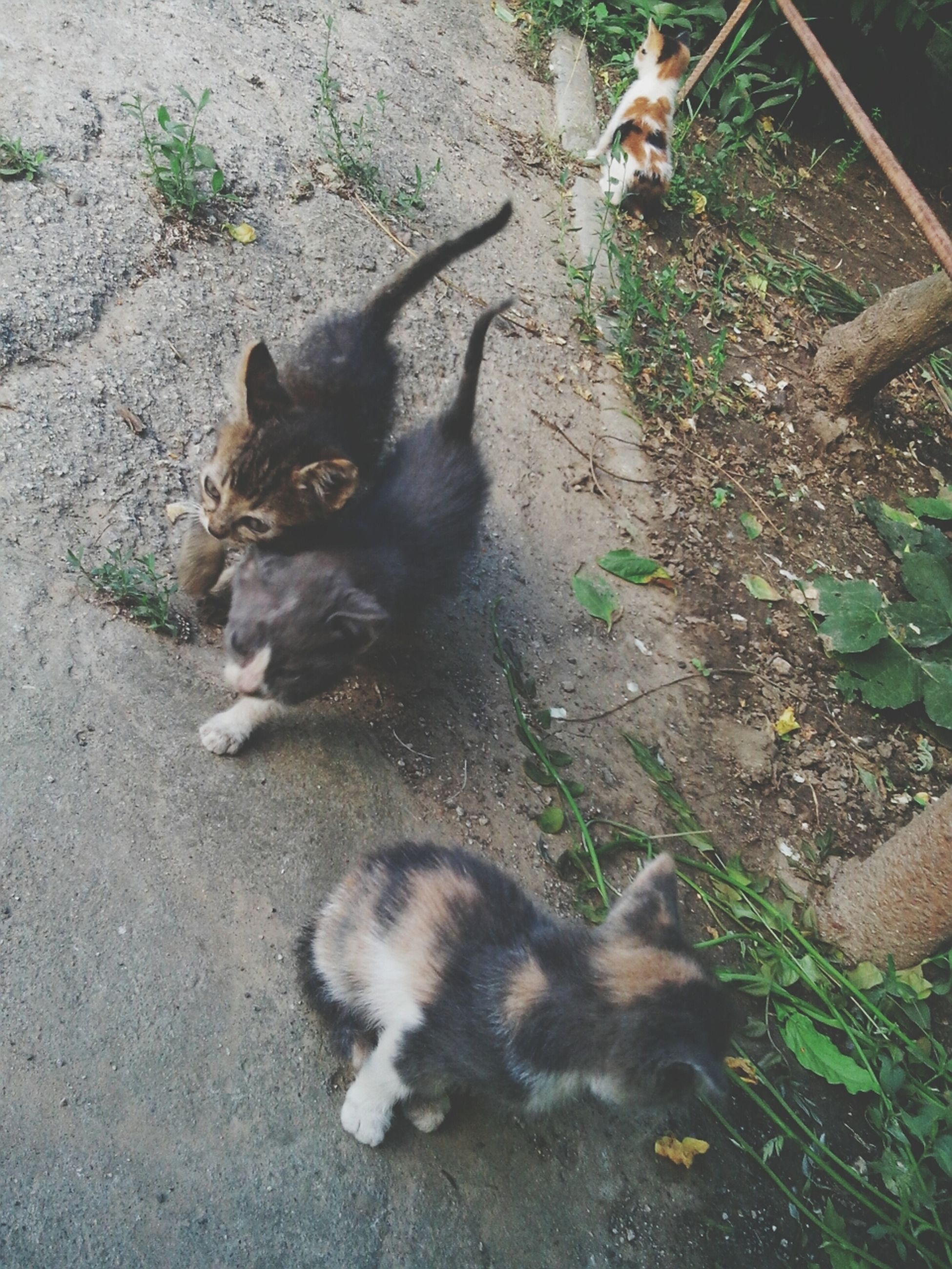 animal themes, pets, domestic animals, mammal, one animal, domestic cat, cat, high angle view, dog, feline, stray animal, sitting, relaxation, full length, plant, outdoors, day, whisker, looking at camera, street