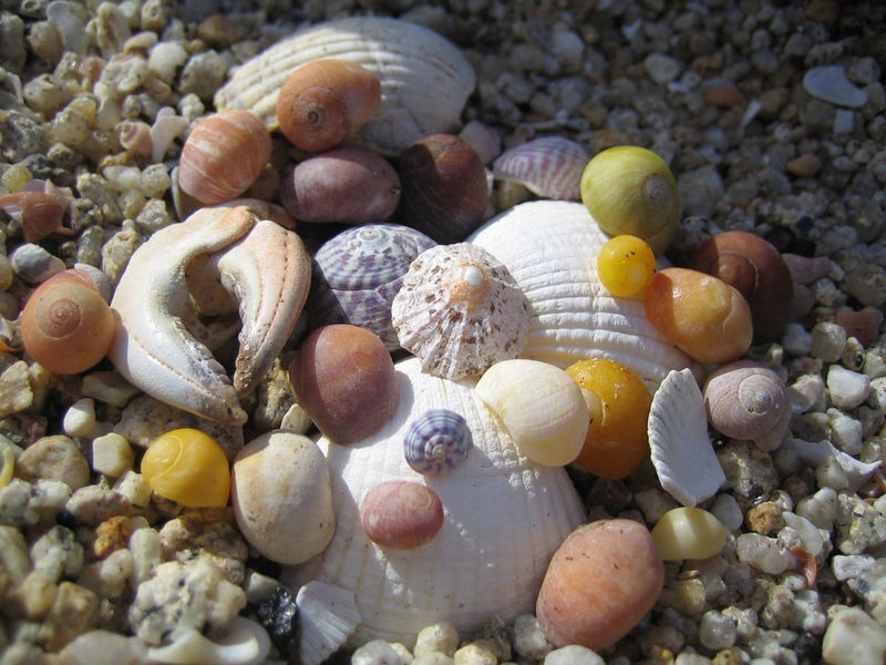 Beach Claw Colours No People Pebble Pebble Beach Sea Shells