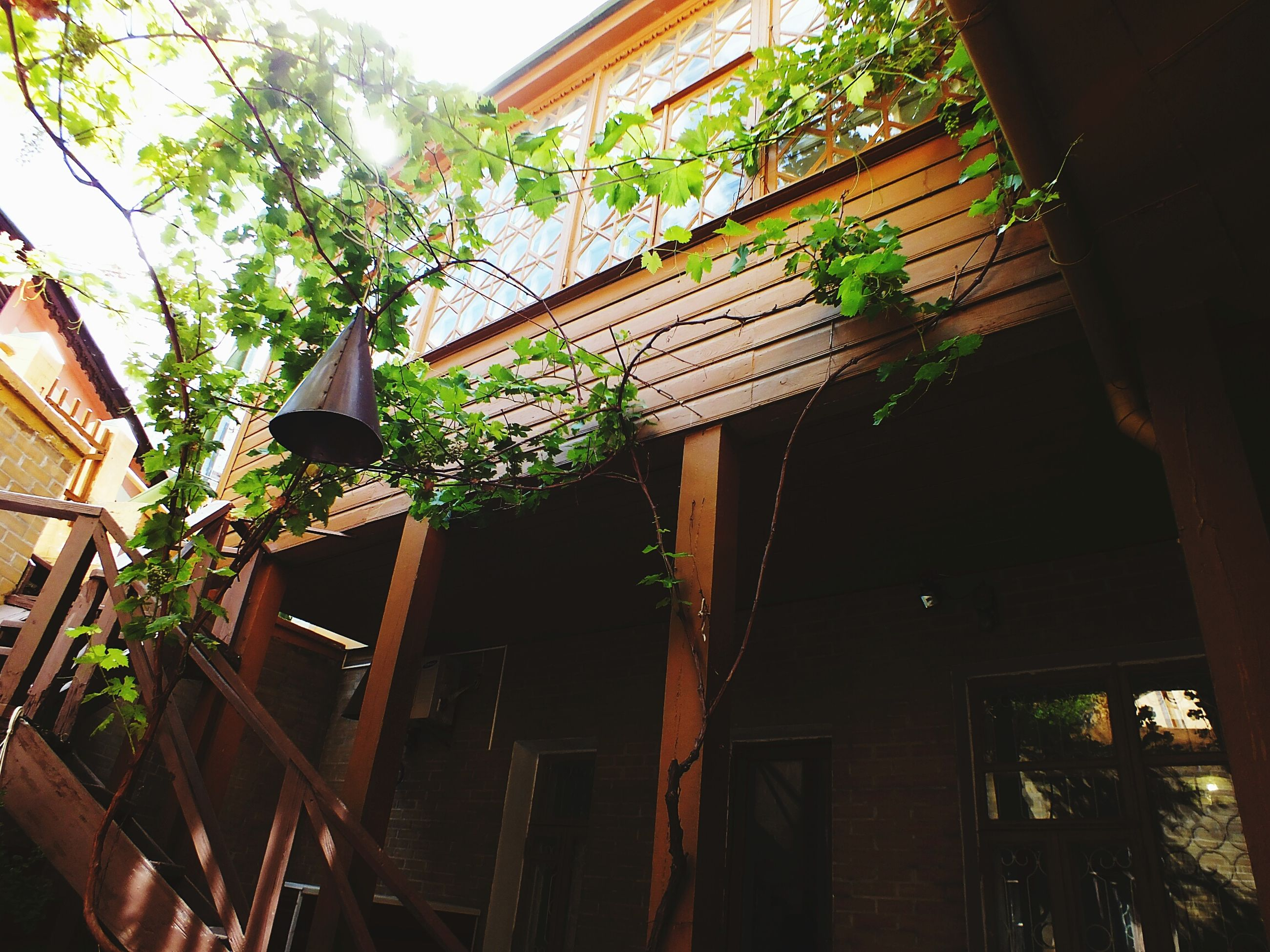 architecture, building exterior, built structure, house, residential structure, residential building, low angle view, tree, growth, plant, balcony, building, day, no people, outdoors, sky, nature, exterior, growing