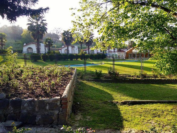 Grass Tree Park