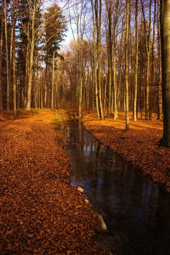 Fluss Hello November Novemberstimmung Im Wald In The Forest Waldspaziergang Herbst Autumn Fall Herbstspaziergang Herbststimmung Herbstfarben Herbstmelancholie Fall_collection Fall Colors Autumn Colors Autumn Collection Autumn🍁🍁🍁 Landscapes With WhiteWall