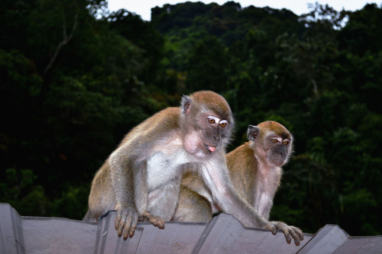 Low Angle View Of Monkeys Sitting Against Mountain During Sunset