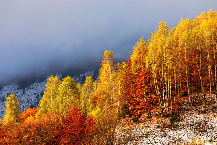 Plants and trees in forest during autumn