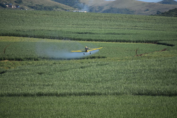 View of airplane flying over agricultural field