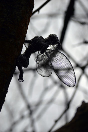 High angle view of insect on metal