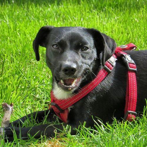 😁 Smiley happy dog 🏡Dogemma Dog Hund Dogofinstagram Dogstagram Dogs Dogoftheday Dogmodel Lovelydog  Lovelydogs Pet Pets Petstagram Petsofinstagram Petsoriginal Cute Animal Dogonthegreen