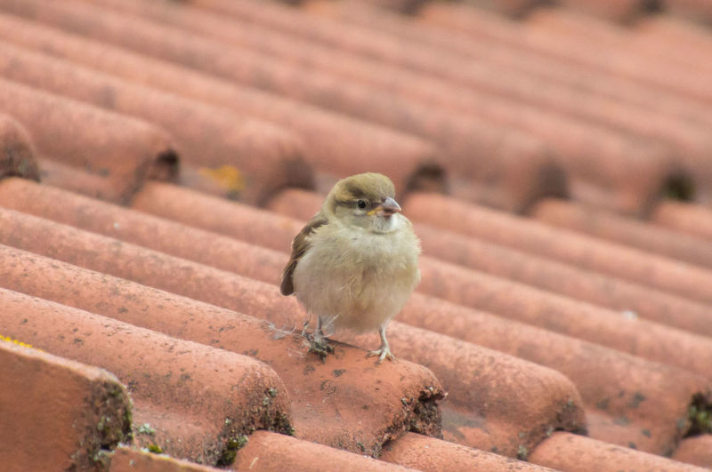High angle view of bird perching on roof
