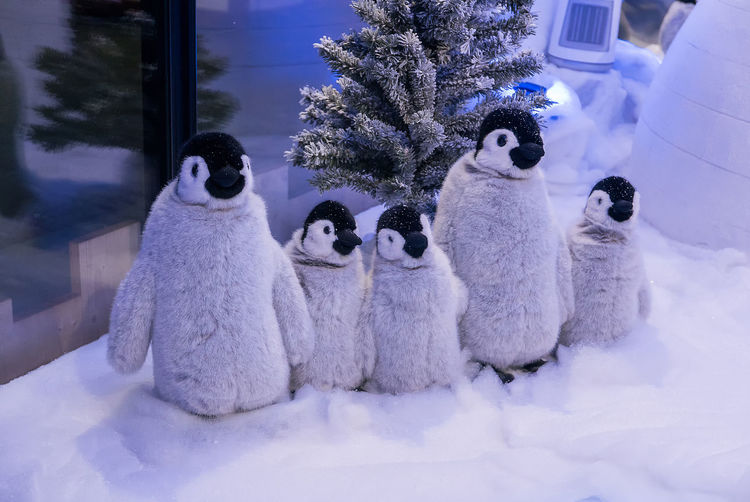 Animal Themes Animals In The Wild Cold Temperature Day Mammal Nature No People Outdoors Snow Togetherness Tree Winter