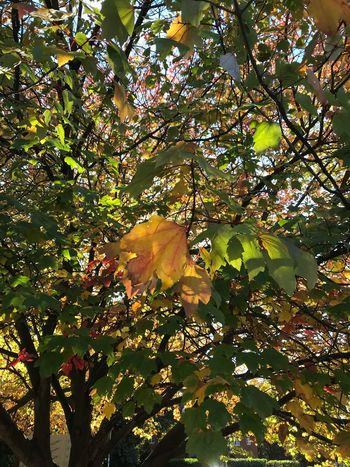 Leaves on the turn Tree Plant Growth Sunlight Beauty In Nature Branch Nature