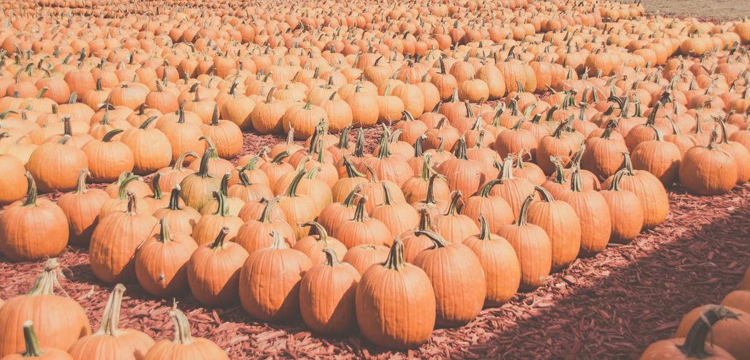 High angle view of pumpkins on ground