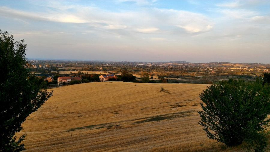 Campodigrano Cornfield Gialloro Giallooro Goldcolour Campagna Country Landscape Outdoors Agriculture No People Panoramic