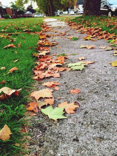 Autumn Colors Taking Photos No Filter Fall