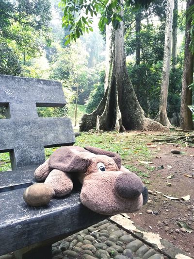 Lubas at Bogor Botanical Garden.