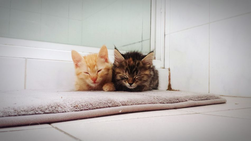 My 2 babies having a nap Cute Pets Cute♡ Cutecats Animal_collection Animals Animal Photography Animal Love Cute Cats Check This Out Eye4photography