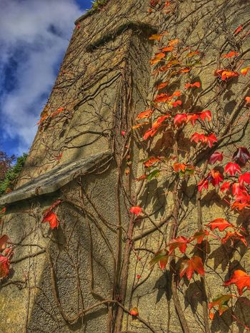 Low Angle View Tree Day Nature Outdoors Tree Trunk Autumn Sky Leaf No People Branch Growth Beauty In Nature Close-up Rock Face