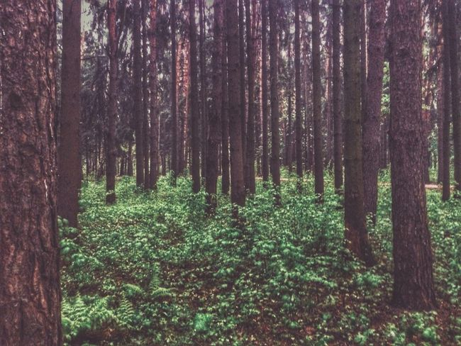 Forest Nature Moscow No People Summer2017