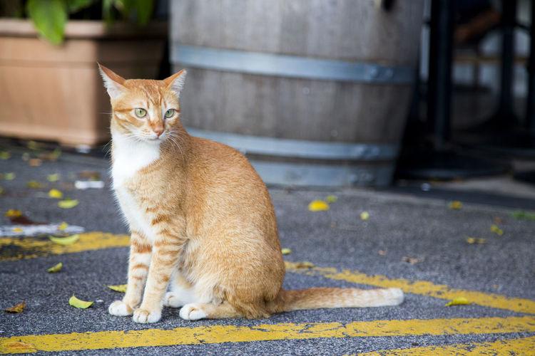 A cute cat by