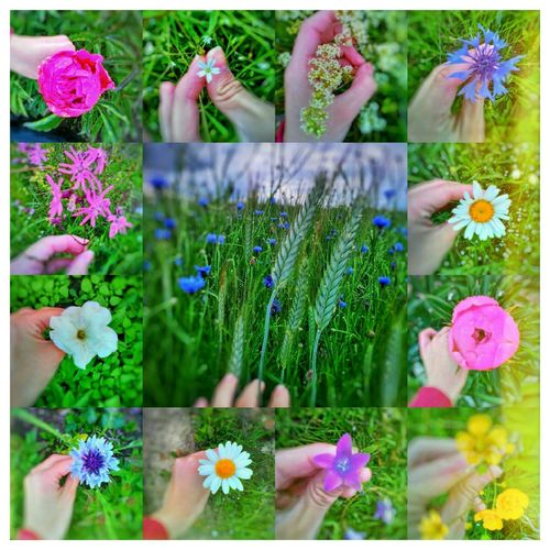 Summer Summertime Summer2016 Summer Flowers Flowers Trifile Details Detail Detailsofmylife Life Blossom Blossoms  Natyre  Fotography Foto Likeforlike #likemyphoto #qlikemyphotos #like4like #likemypic #likeback #ilikeback #10likes #50likes #100likes #20likes #likere Like Followers Followme