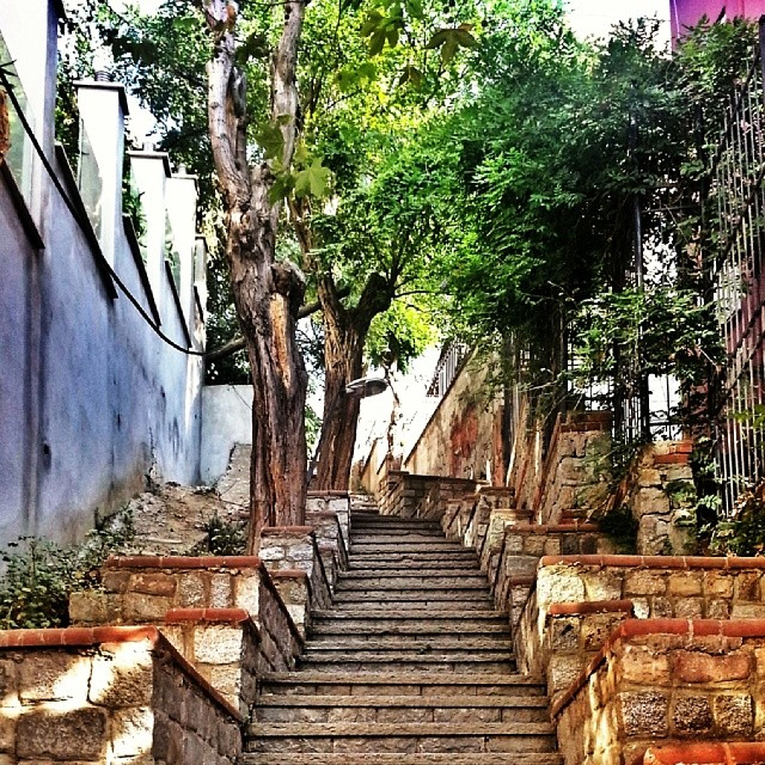 built structure, architecture, building exterior, the way forward, tree, house, steps, residential structure, day, narrow, wall - building feature, diminishing perspective, residential building, outdoors, graffiti, no people, wall, growth, steps and staircases, building