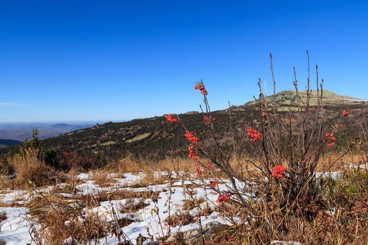At the top of Karitshal mountain Sky Beauty In Nature Mountain Scenics - Nature Nature Plant Clear Sky Tranquility Blue Tranquil Scene Non-urban Scene Land Day Environment Cold Temperature Snow Landscape Tree Outdoors Gornaya Shoria Karitshal Siberia, Russia Siberia Berries On A Branch