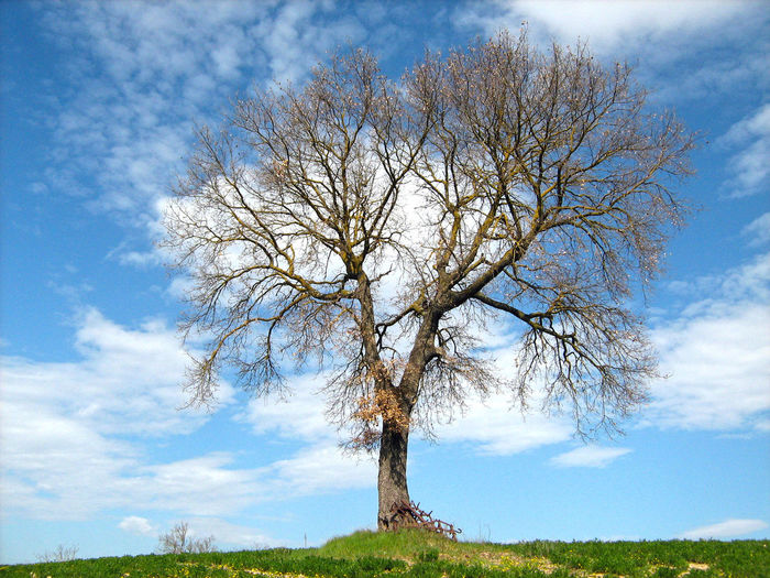 Bare tree in a