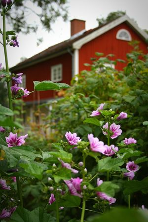 Mårbacka Sunne Selma Flowers Garden Countryside Beautiful Place August 2016