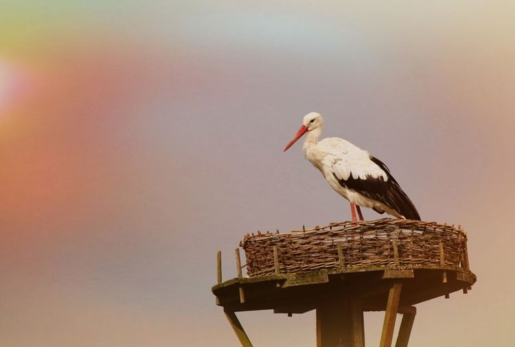 Low angle view of stork in basket