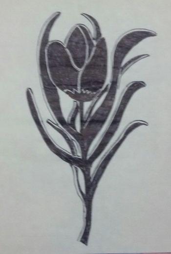 Draws Draw Drawings Drawing