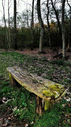 Weathered Bench In A Forest Clearing Aged Wood Forgotten Places  Calming Place Spring 2016 Nature Textures Deep In The Woods No People Old Abandoned Places Benches Germany🇩🇪 Telling Stories Differently