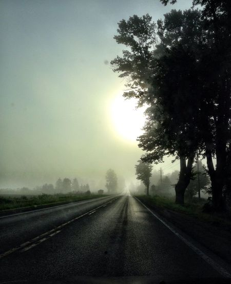 Morning midsummer drive Perfect Spring Morning Soft On The Eyes Tranquillity At Its Best Tranquill Drive Before The Sun Burns Off The Fog Soft Natural Morning Light Foggy In The Distance Empty Road Sunrise Sun Through Fog Tree Lined Road Trees Foggy Morning Misty Tree Direction Plant Transportation The Way Forward Sky Road Country Road Country vanishing point Diminishing Perspective Fog