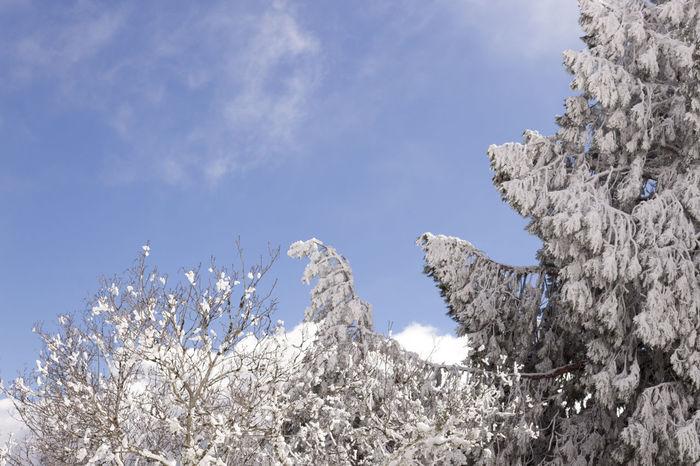 Árvores brancas    White tree - February 2016    Citybycity Eye Em Around The World Winter Snow White Manteigas Serradaestrela Portugal