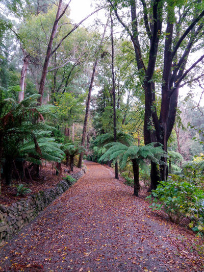 Alfred Nicholas Gardens Australia Autumn Autumn Beauty In Nature Coloured Leaves Dappling Day Gardens Growth Leaves Nature No People Outdoors Pathways Plant The Path Ahead Tree Tree Ferns Victoria Australia