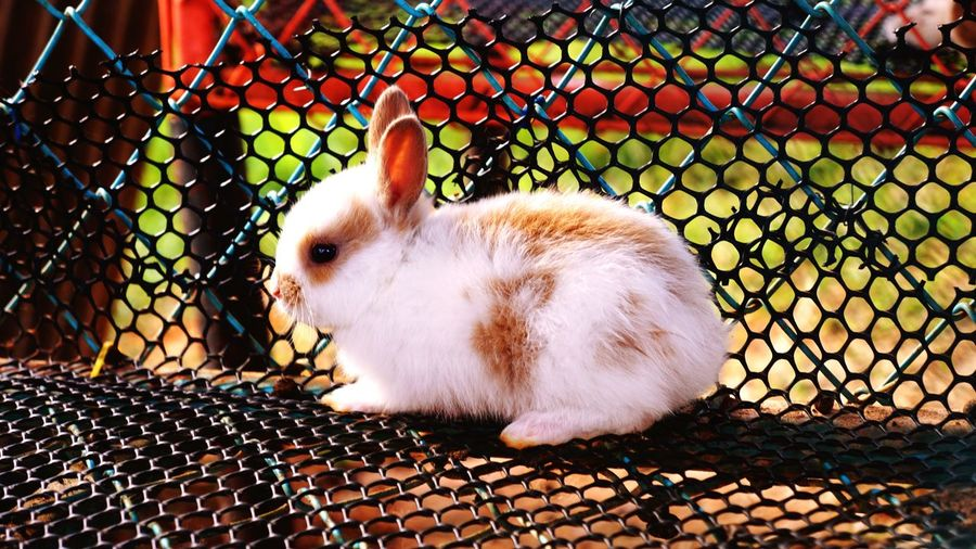 White rabbit ball in the cage
