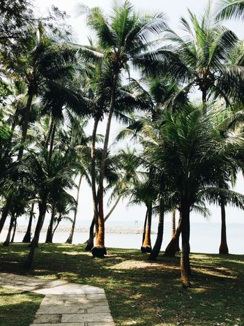 Singapore Coconut Trees Kayaking Beach Sisters Islands Sentosa Kayakasia