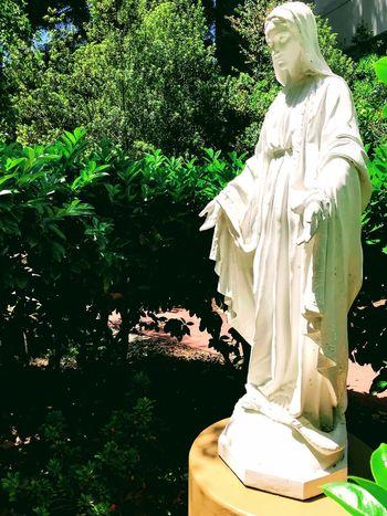 Our Lady, Santa Rosa Santa Rosa CA Healing Garden Religious Statues Religious Art Sculpture Art And Craft Human Representation Statue Plant Representation Tree Female Likeness Sunlight White Color