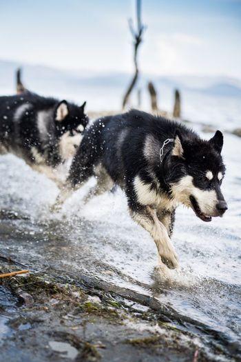 Dog on snow against sky